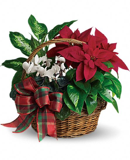 This gift basket, delivered by a florist, features mixed holiday plants in a basket tied with a festive plaid organza bow