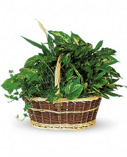 Cupid-104 Large Basket Garden T212-1A 57,95$  / 79,95$