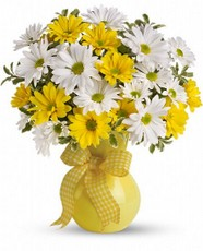 Cupid-13-bouquet-Marguerites-ensoleillees 39,95$ / 49,95$