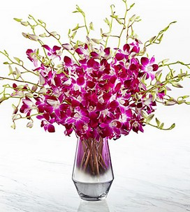Cupid-34-Pink at Heart™ Orchid Bouquet  78.99 | 126,99 $
