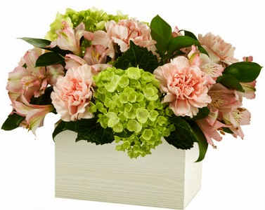 Spring flower Cupidon Florist